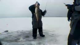 🎣❄️Ice Fishing Day 3!❄️🎣 🐊 !icefishing !swimming ☠️ !discord