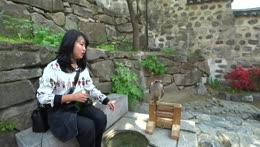 Heosu pets falcon