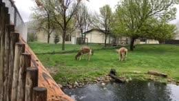 Zoo in rain