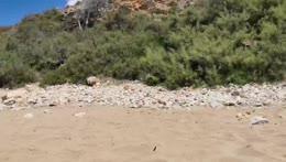 Beach Stream!
