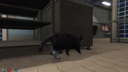 Soda Cat Steals Burger Shop's Burgers