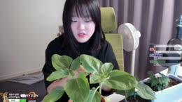 [캠] 식물 자랑하려고 킨 캠방송