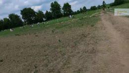 🍓Strawberry farm