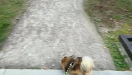 Walking time  with Hugo