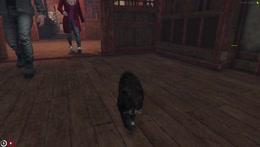 Cat RP