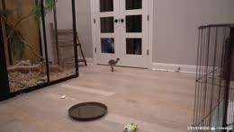 Predator stalking its prey :O