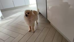 Nabi the smartest dog ever <3