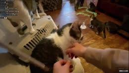 Коты целуются >3 - Помощь приютам для животных 😇 Helping animals 09/06/21