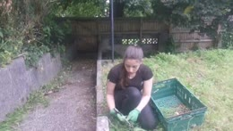 saving the garden, but also the bugs <3