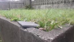 kitty in the garden widepeepoHappy
