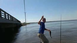 Fish champ