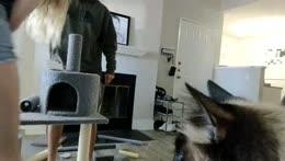 Cat POV