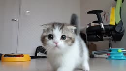 cuter than 72