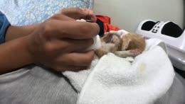 Qnqn as kitten Adorable