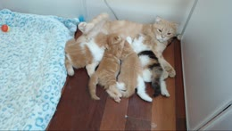 Cat+momma+feeding+kittens