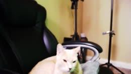 Martin+Cat