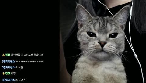 귀여운 고양이 앞니
