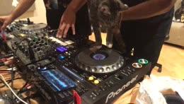 DJ+Violet