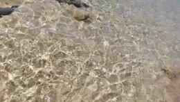 mila swimming