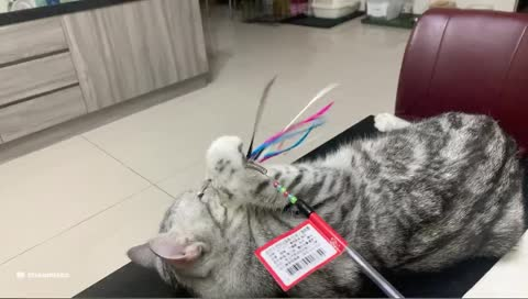 每日吸一貓 煩惱遠離你<3