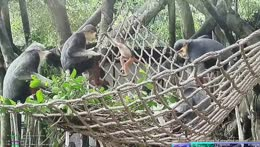 Baby monkey belly flop - Khao Kheow Zoo - Pattaya
