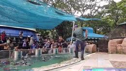 A minion almost escapes - Khao Kheow Zoo - Pattaya