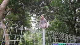 Keth talking to a monkey