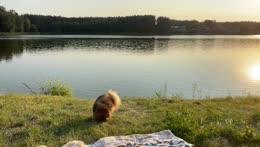 Sunbath with Hugo
