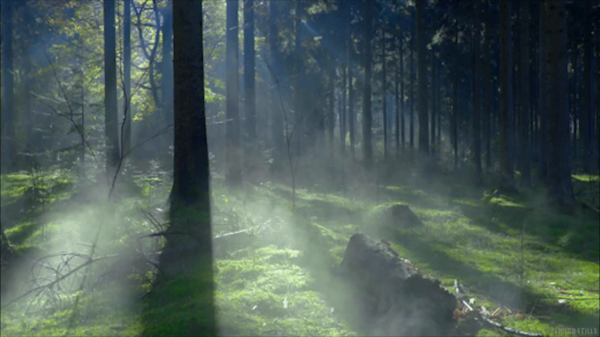 Картинки леса гиф