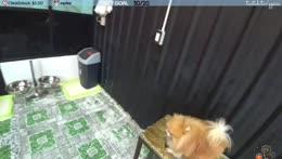 doggo3