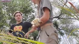 11 Opossum Release Stream