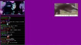 ciberpayaso de cumple now viejo sabroso // VIDEOS x PUNTOS DEL CANAL