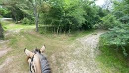 IRL HORSE TRAIL RIDING STREAM 🐴- !social